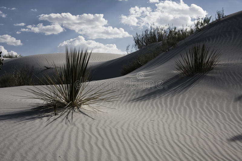 Download Desert Flora Stock Photo - Image: 27879360