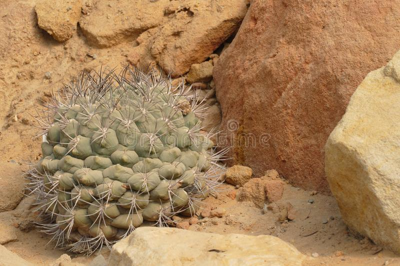Desert flora with shrub. And cacti royalty free stock photography