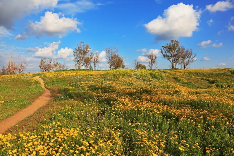 Download Desert in flowering stock photo. Image of israel, flowers - 23884758