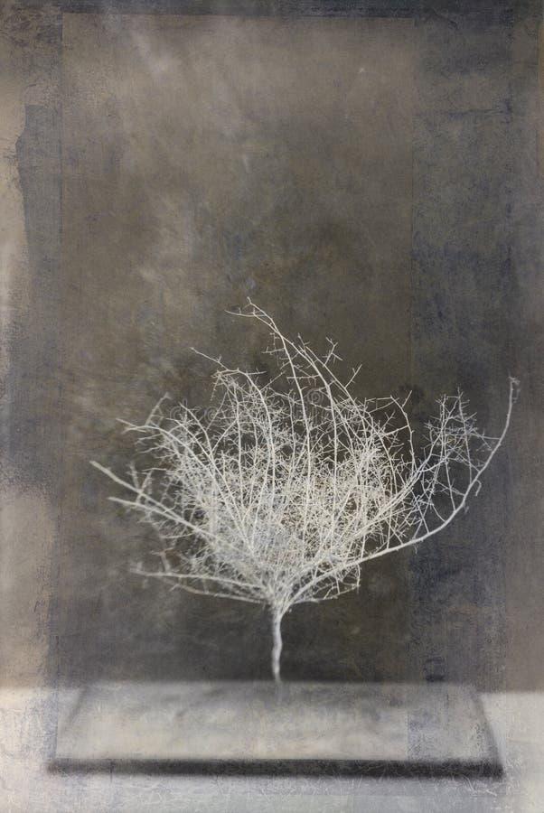 Desert Forms 7. Skeleton of desert plant. Studio still life. Photo based mixed medium image. Extreme image softness, textures, and grain