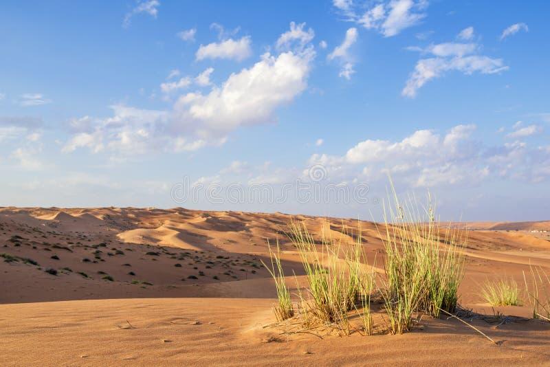 Desert gras Wahiba Oman stock photos