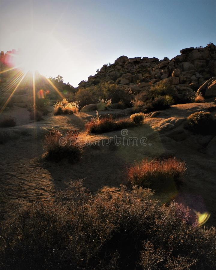 Desert Grasses Backlit at Sunset. Glowing desert flora: grasses and shrubs, cover a sandy hill at sunset. Rock formations in background at golden hour. Lens stock photo