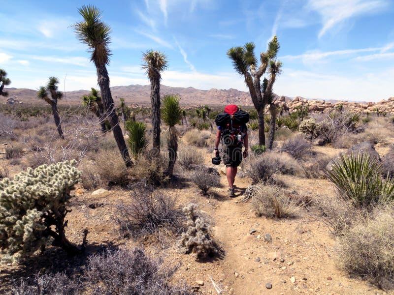 Desert Hiker. A hiker walking along a trail thru the desert royalty free stock photo