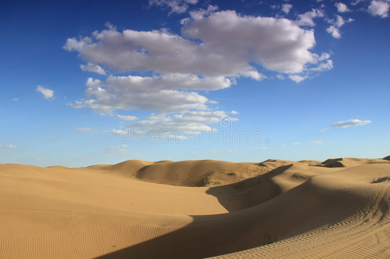 The desert stock image