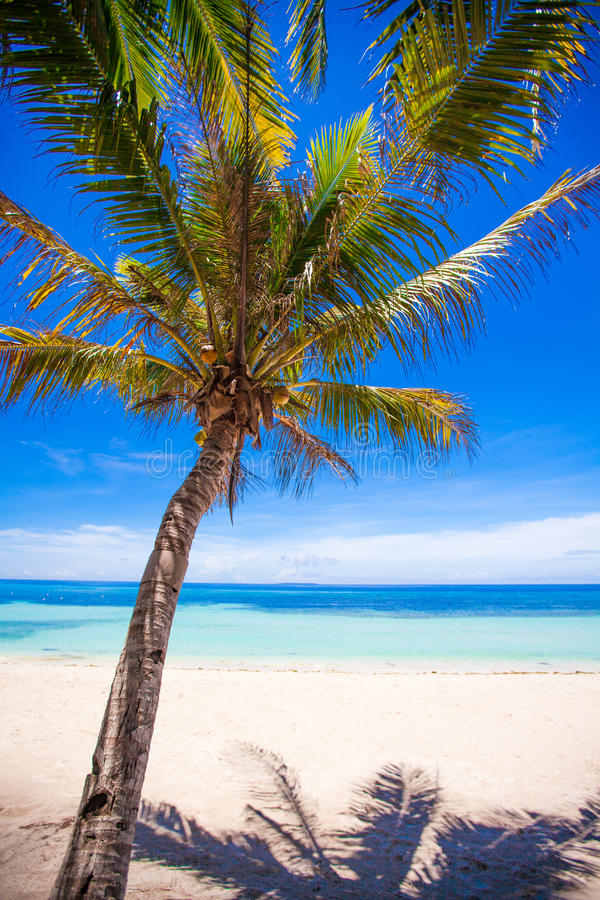 Desert Island With Palm Tree On The Beach Stock Photo