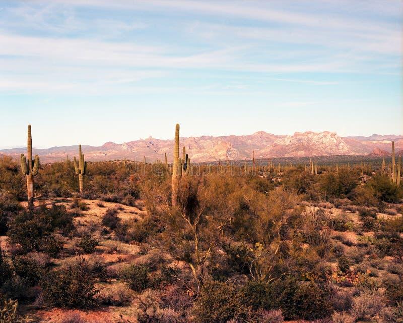 Download Desert Landscape stock photo. Image of cactus, colorful - 28470704