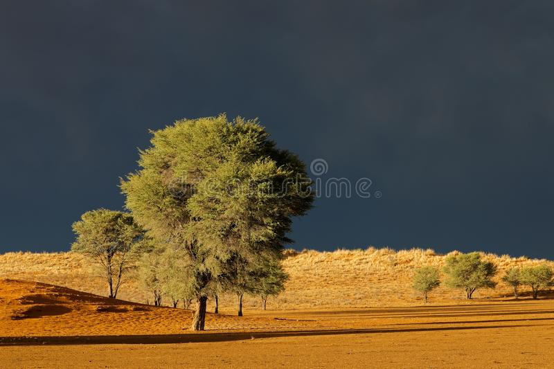 Desert landscape against a stormy sky royalty free stock photo