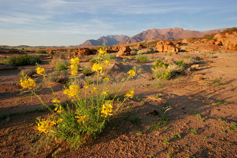 Download Desert Landscape, Brandberg Mountain, Namibia Stock Image - Image: 1558957