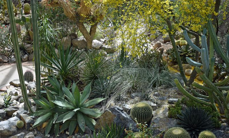 Desert Landscape Garden and Conservatory. In Albuquerque, New Mexico where the Cactus and Succulents bloom year round stock photography