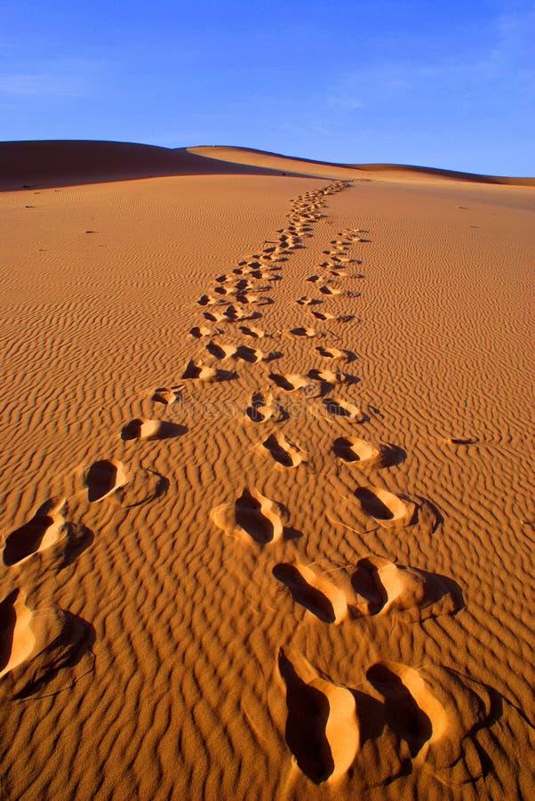 Desert landscape of gobi desert with footprint in the sand, Mongolia. Landscape of gobi desert with footprint in the sand, Mongolia royalty free stock photos