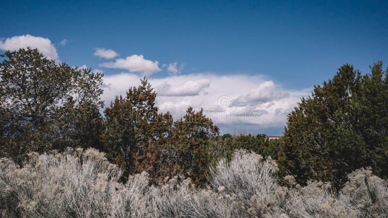 Desert landscape near Santa Fe, New Mexico, USA. Desert landscape with trees under blue sky and clouds, in Museum Hill, Santa Fe, New Mexico, USA stock photo