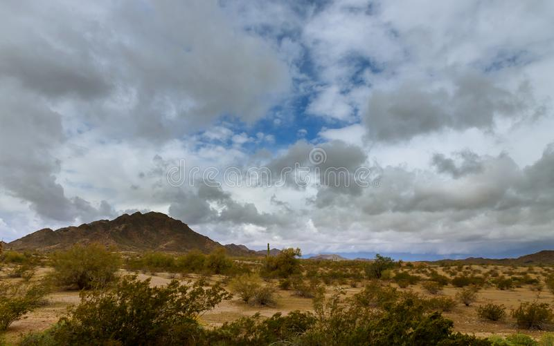 Desert landscape in Phoenix, Arizona cactus on the mountain royalty free stock photography