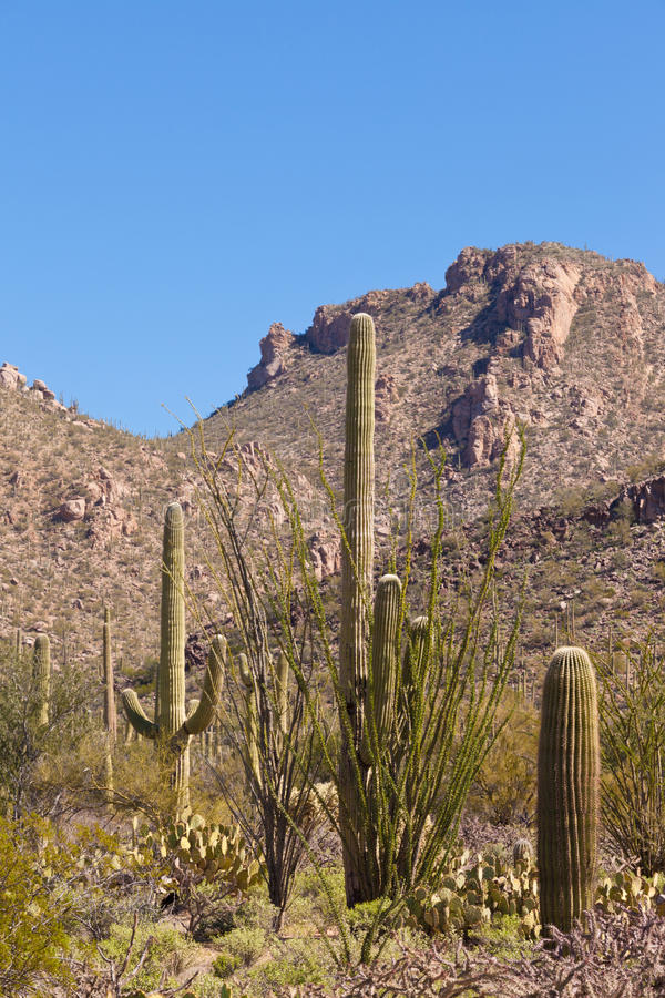 desert landscape of saguaro np near tucson az us stock photo image