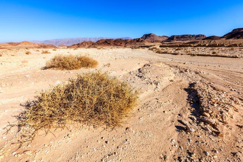 Download Desert Landscape Stock Image - Image: 36268971