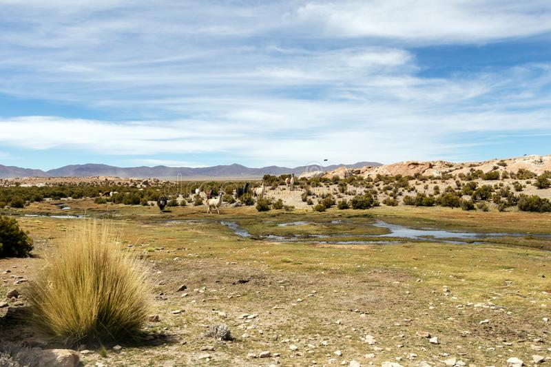 Desert landscapes with mountains in Bolivia at the dry season, dry vegetation is a natural background. Rocky and arid mountain landscape : Desert valley with royalty free stock photo