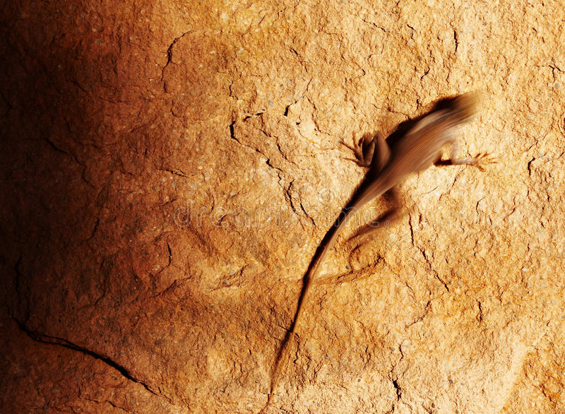 Download Desert lizard on the rock stock photo. Image of blur - 17773706
