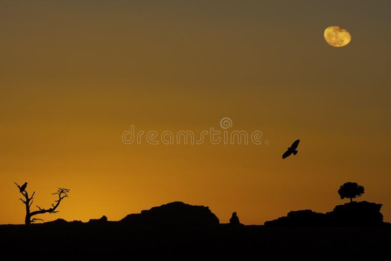 Desert Magic royalty free stock photography