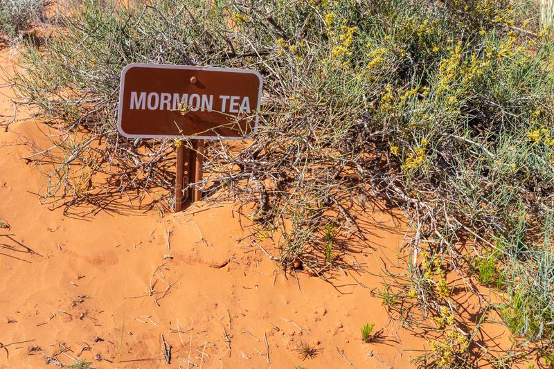 Mormon tea. Monument Valley Tribal Park, USA. Desert mormon tea. Plant and sign against blur red sand background. Trail path signage Monument Valley Navajo royalty free stock images