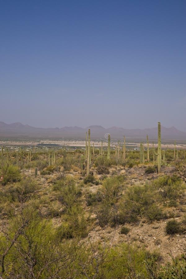 Desert Morning royalty free stock photos