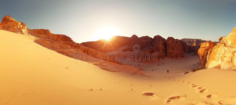 Desert. With mountains. Sinai, Egypt royalty free stock photos