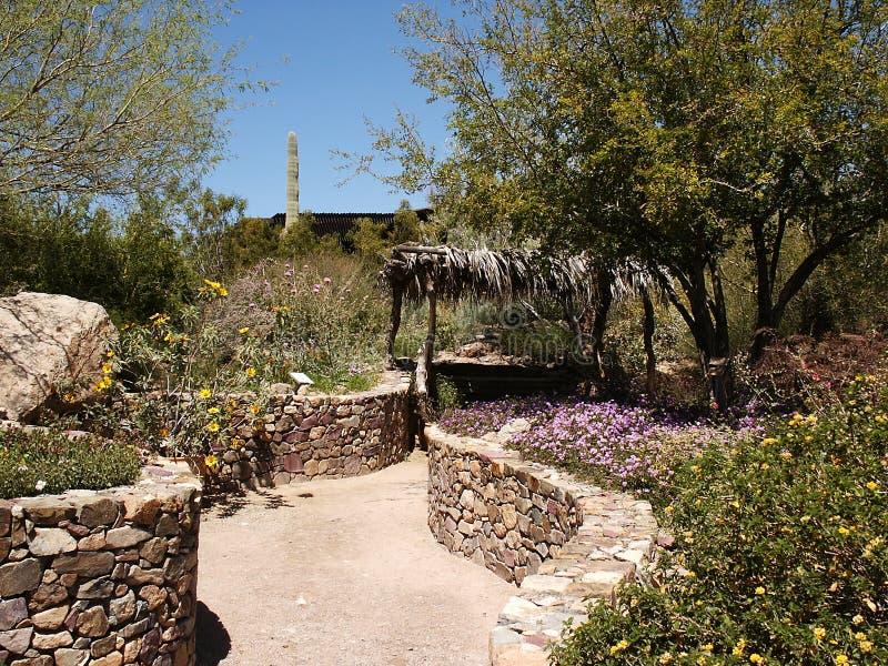 Download Desert Museum stock photo. Image of ecology, exhibit, saguaro - 197054
