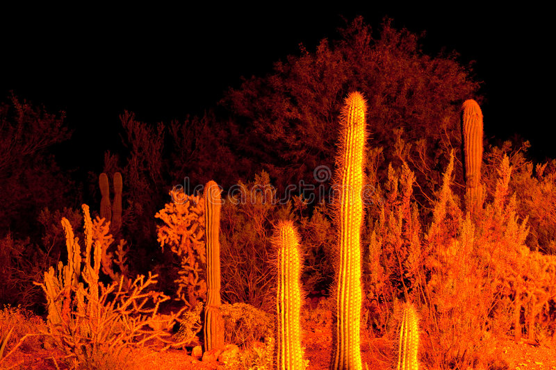 Desert at night. A background with a view of the Saguaro cactus in the Arizona desert, at night stock images