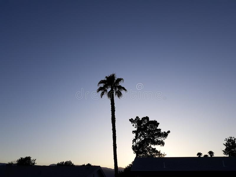 Desert Nights in Summer. Palm, trees royalty free stock image