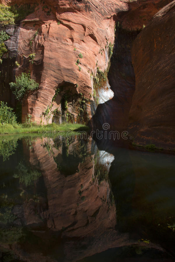 Desert Oasis in Coyote Gulch stock images