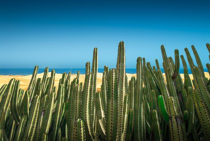 Desert panorama of the dunes with cactus stock photos
