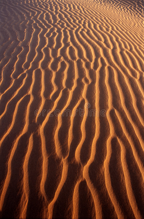 Desert Pattern stock images
