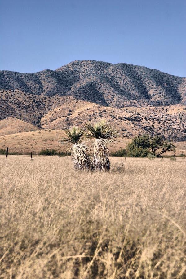 Download Desert plant stock photo. Image of scenic, desert, state - 13027864