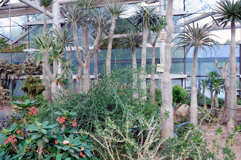 Desert plants royalty free stock photo