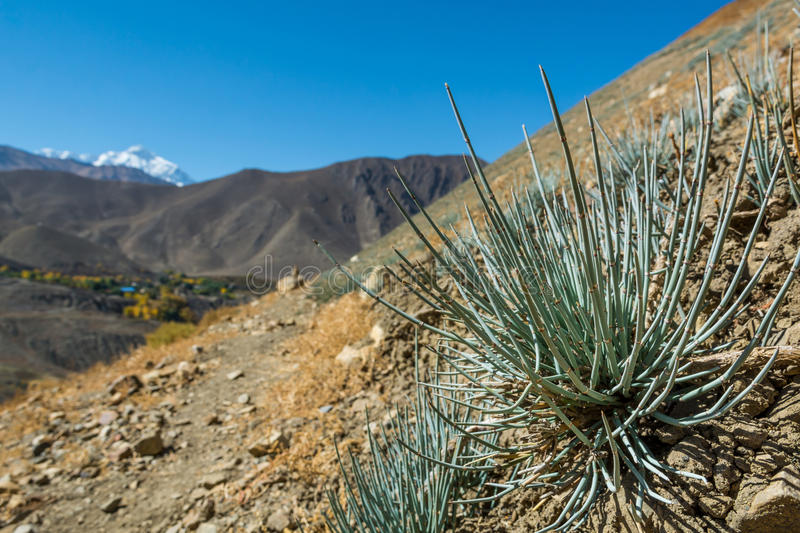 Desert plants growing in arid wastelands. stock images