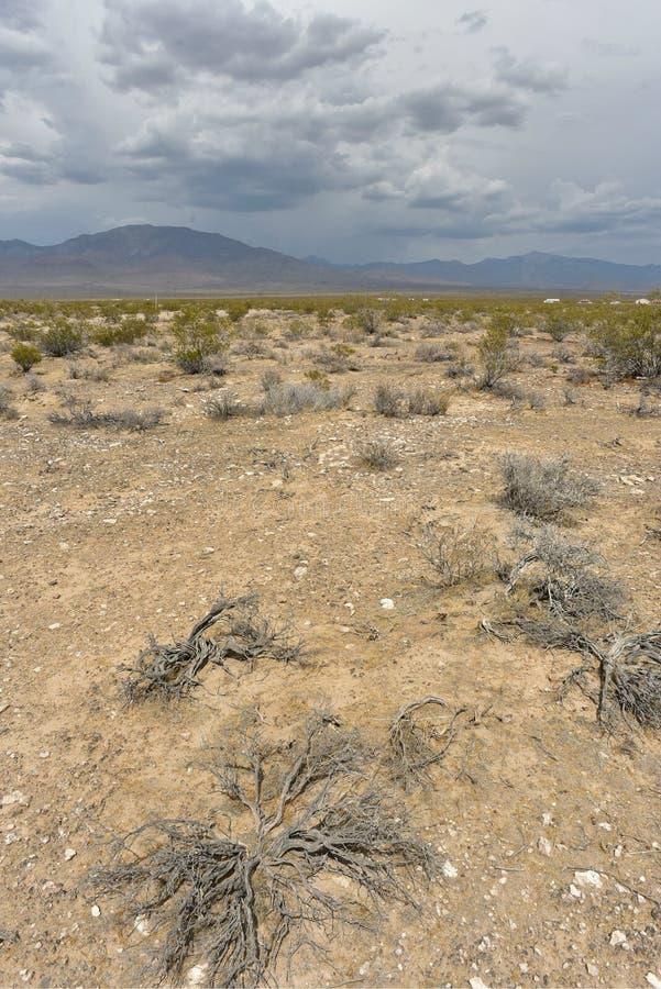 desert plants in mojave desert landscape town of pahrump nevada