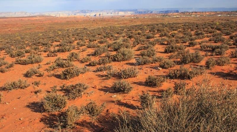 Desert plants. The Sonoran Desert of southwest Arizona, sandstone formations. USA Arizona stock photography