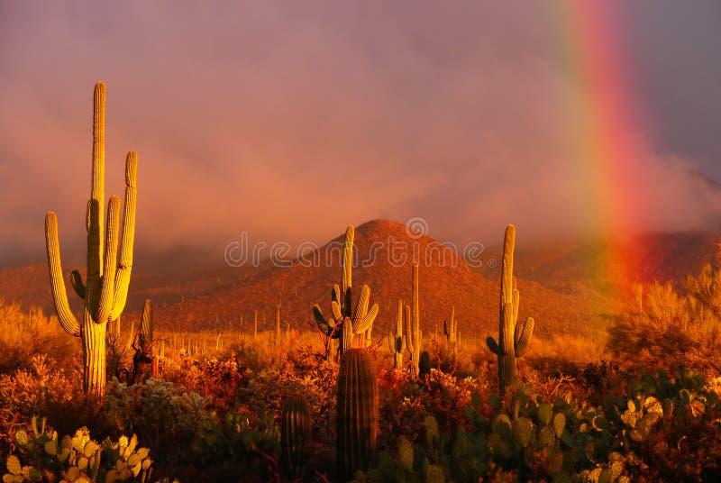 Download Desert Rainbow stock image. Image of cacti, horizontal - 20595547