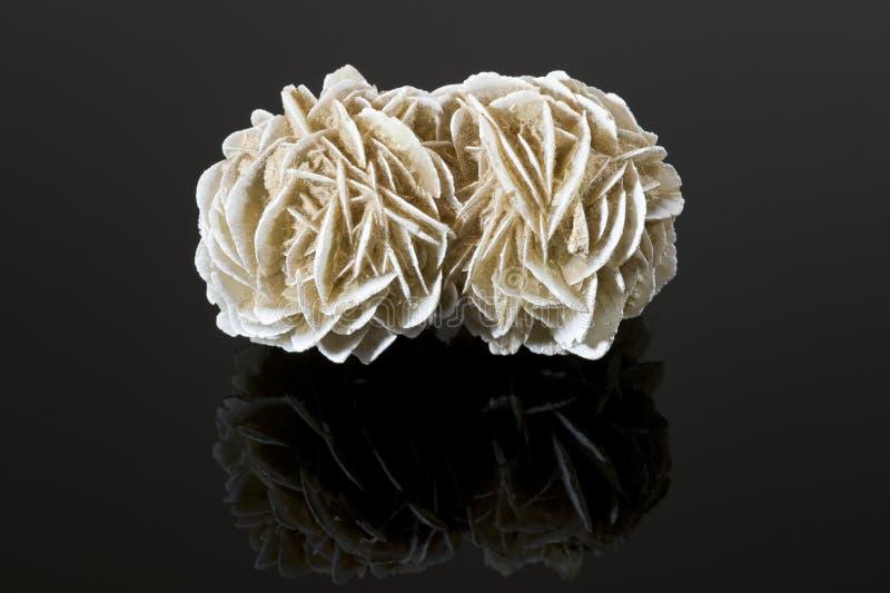 Desert rose on black reflective surface stock photography