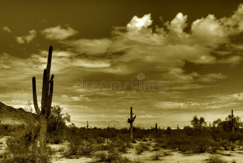 Desert Saguaro in Sepia stock images
