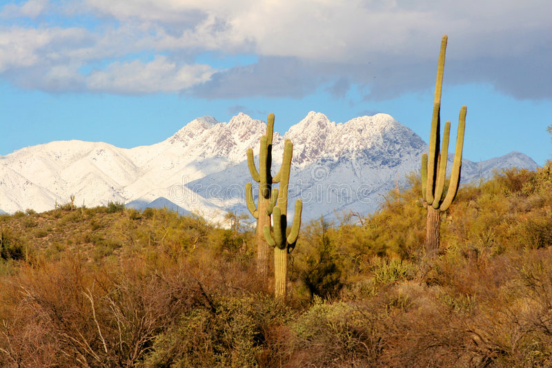 Desert, Saguaros and Snow on the Mountains behind. Amazing Desert image with Snow caped mountains stock image