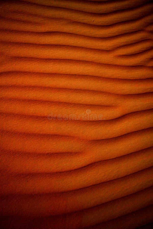 Desert sand royalty free stock photos