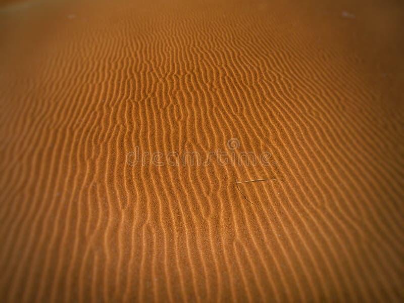 Desert Sand Free Public Domain Cc0 Image