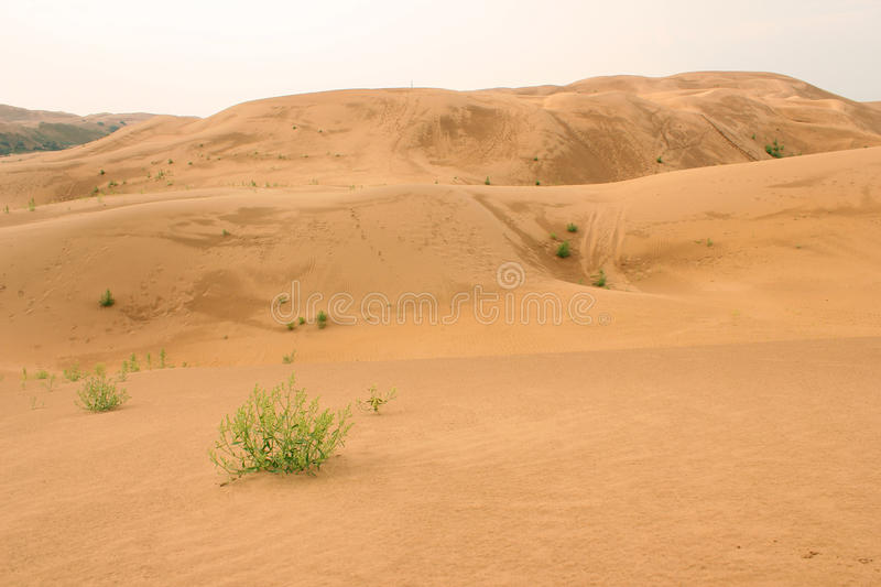 The desert. Desert sand desert wild nature and outdoor grass green plant drought in Africa photography material in Inner Mongolia Mongolia xinjiang sand sand royalty free stock image