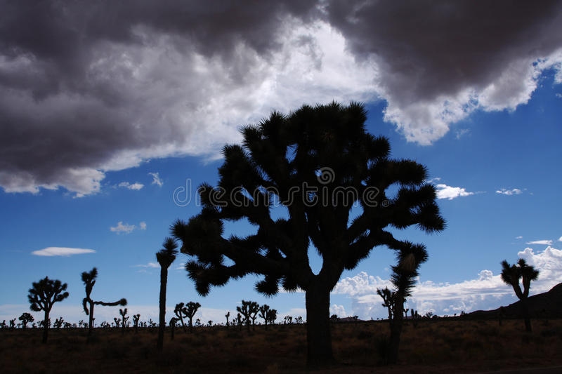 Download Desert Silhouette Stock Images - Image: 16474464