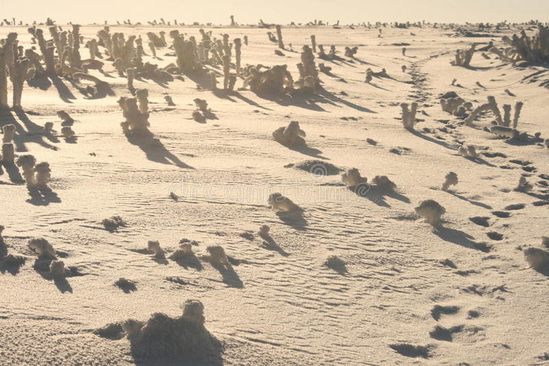 Desert in snow royalty free stock image