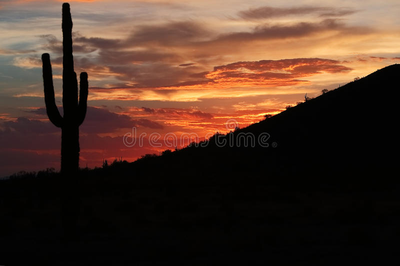 Desert Southwest Landscape and Nature. Sunset light with clouds and silhouette of saguaro cacti from the desert Southwest stock photos