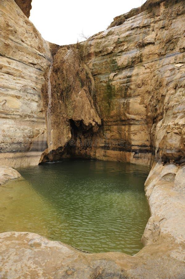 Desert spring in Negev. royalty free stock photography