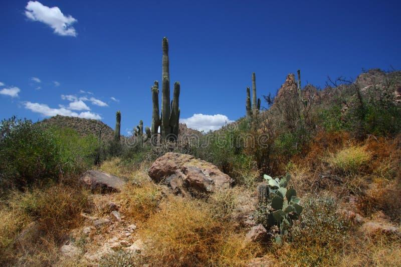 Download Desert Ssring Stock Images - Image: 5265874