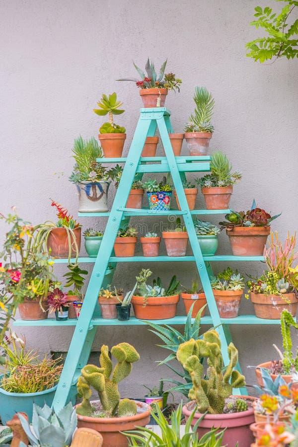Desert succulent planter pots on ladder stock images