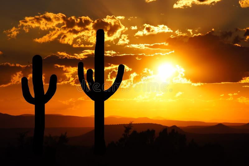 Desert sunset. Arizona desert sunset with giant saguaro silhouette royalty free stock photography