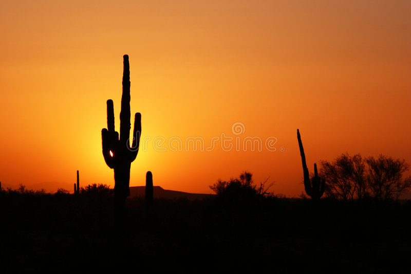 Download Desert Sunset Silhouette stock image. Image of silhouette - 3452407